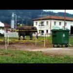 El elefante del circo Coliseo, feliz en Villaviciosa donde se ha prohibido su actuación
